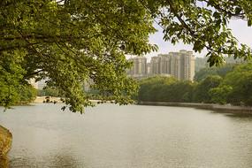 惠州西湖-南湖的湖水和绿树