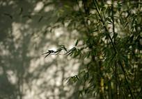 竹子的影子