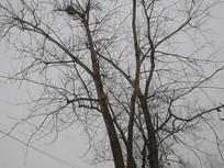 冬天干枯的树木