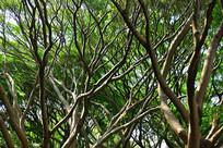错综复杂的树杈