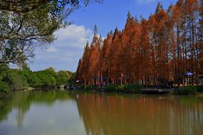 江心嶼東園湖邊的秋色