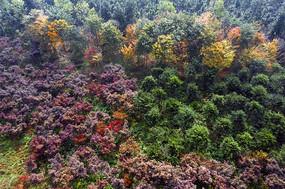 鳥瞰森林秋色