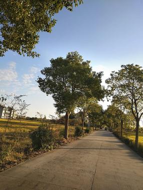 阳光洒满小路