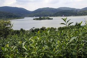 茶园南北湖