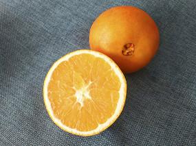 静物脐橙素材图