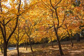 秋天的樹林