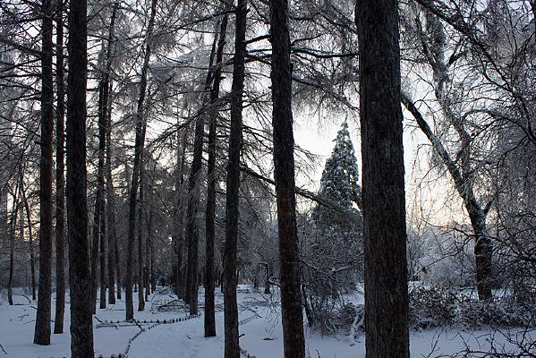 傍晚的林间小路