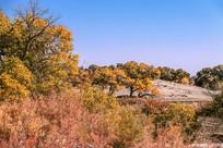 大漠胡杨林的秋天