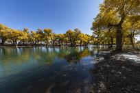 弱水河秋季