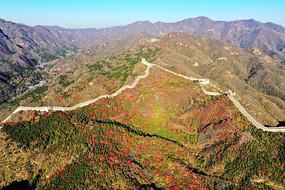 巍峨的八达岭长城红叶谷