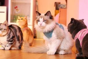 一群可爱的宠物猫