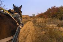 道路上的马在拉车