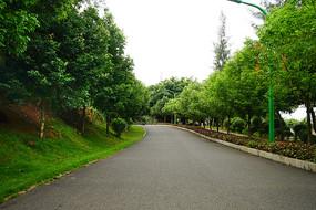 公园风景道路