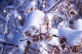 冰雪包裹的种子