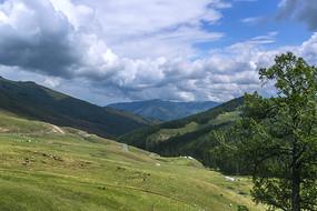 北疆高山牧场风光