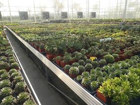 花卉產業園