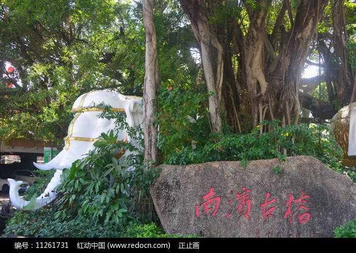 深圳锦绣中华南滨古榕 图片