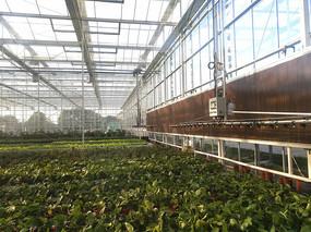 温室大棚花卉