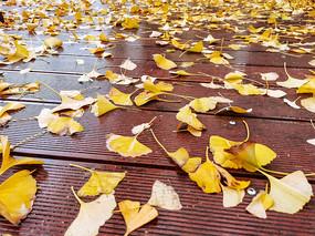滿地桔黃色的樹葉