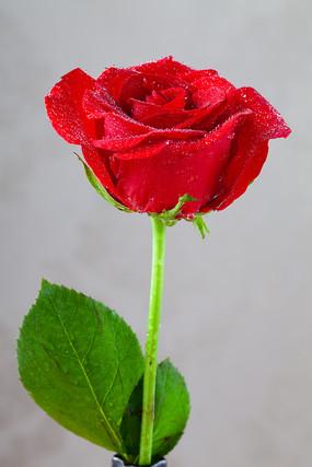 紅色的玫瑰花
