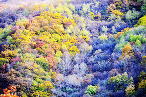 层林浸染的山谷