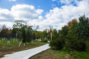 秋季的林间小路