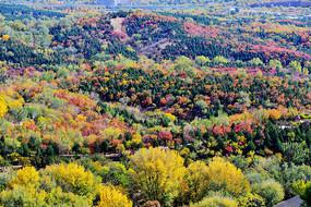 山峦起伏的森林秋色