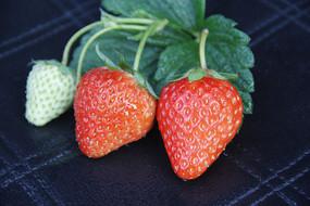 草莓绿叶拍摄
