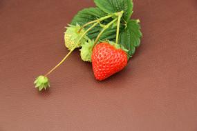 果实绿叶草莓