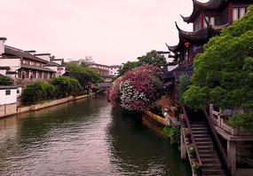 江南水乡河岸盛开的鲜花