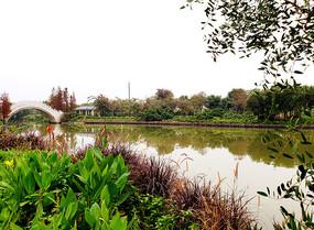 湖畔嫩绿的水草和白色石桥