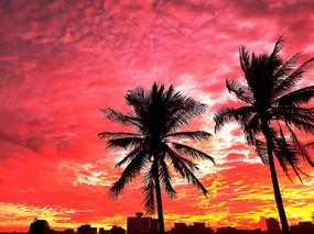 火烧云下的椰树