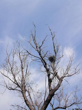老树和鸟窝