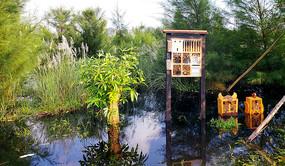 湿地公园一景