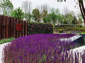 美丽的紫色花卉