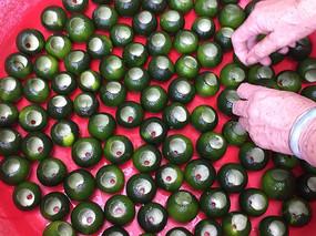 柑普茶制作-处理中的新会柑子