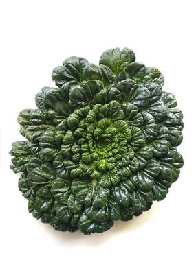 绿叶塌棵菜