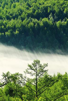 绿色树林晨雾风景