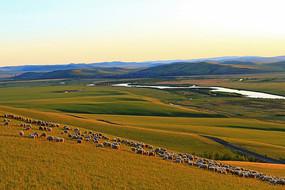 呼伦贝尔草原河岸牧场羊群