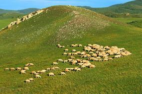 呼伦贝尔山地牧场羊群风景