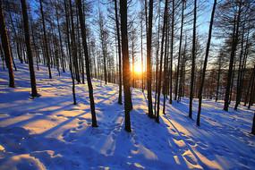 大兴安岭冬季雪原松林日落