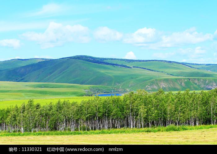 大兴安岭林区山地白桦林风景图片