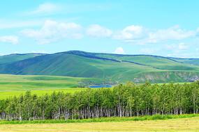 大兴安岭林区山地白桦林风景