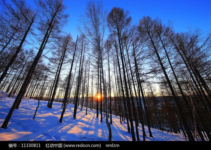 大兴安岭森林雪野暮色风景图片
