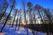 大兴安岭森林雪野暮色风景