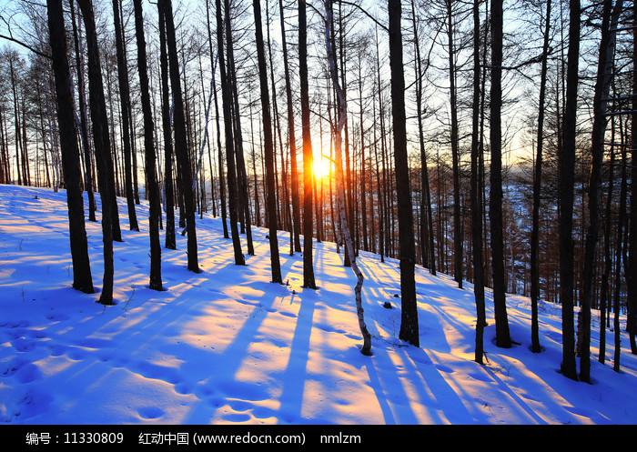 大兴安岭雪原松林暮色图片