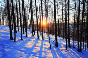 大兴安岭雪原松林暮色