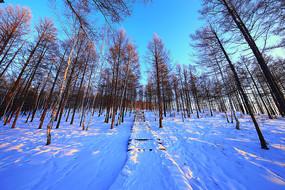 雪野树林栈道夕照