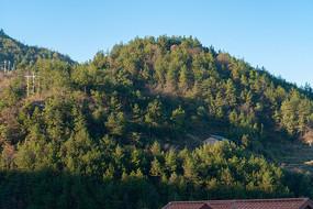 阳光照耀的绿色生态林