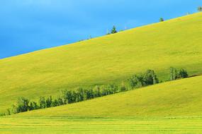 草原绿色牧场风景